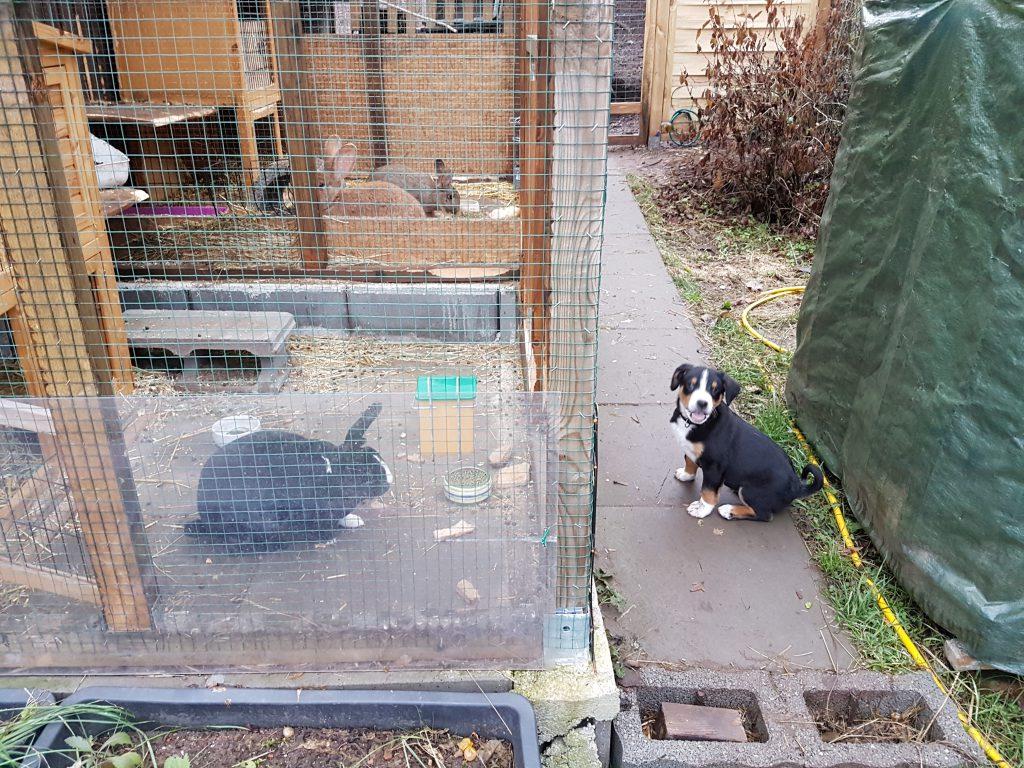 Steti und die Kaninchen 2